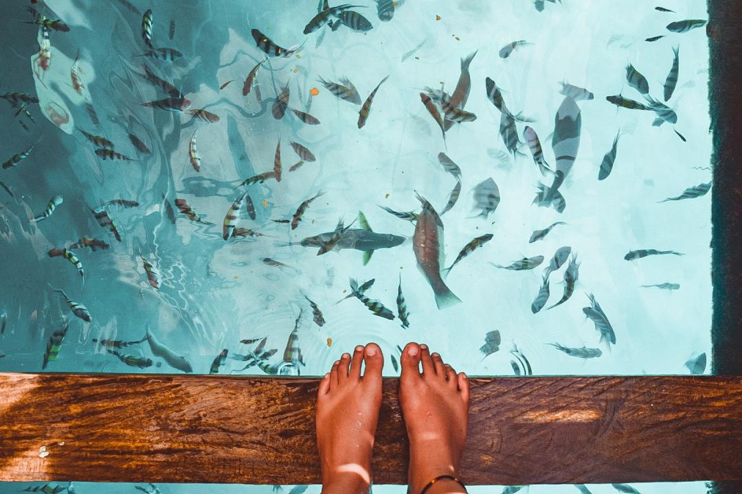 Looc Fish Sanctuary, Tablas | themhayonnaise